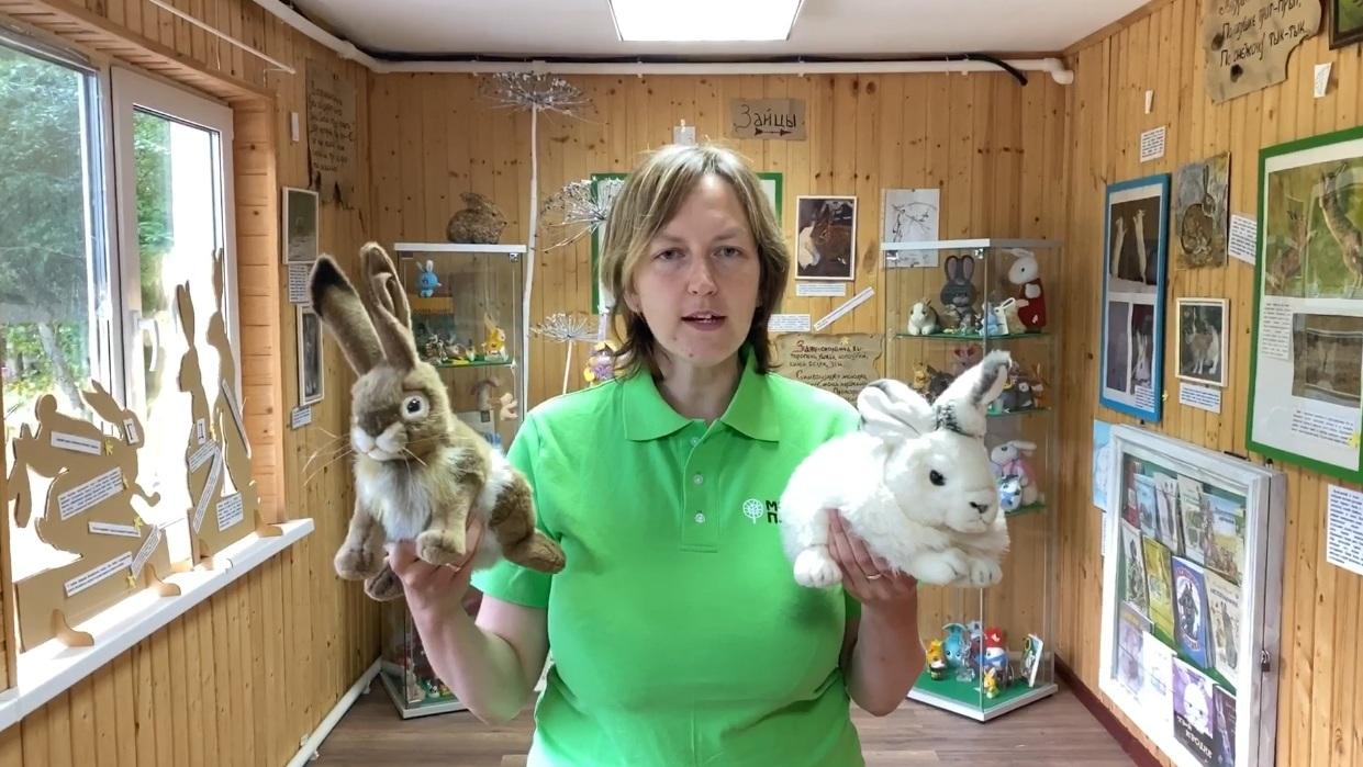 Экскурс Музей зайца